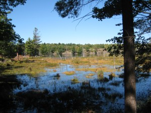 A marshy inlet on Slide Lake, Frontenac Park